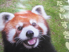 IMG_cute-panda.JPGのサムネール画像