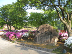 IMG_早朝の西山公園1693.JPG