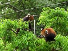 panda.JPGのサムネール画像のサムネール画像