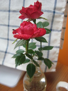 mini-rose.JPG
