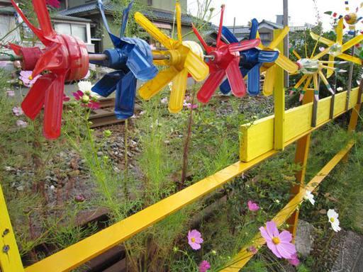鯖江市住吉町線路沿いのコスモスと風車3